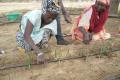 Des agriculteurs en train d'installer le goutte à goutte, système d'irrigation inventé par Israël