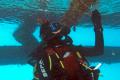 Le Dr. Noa Shenkar en plongée étudiant les ascidies