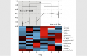 Bacterial growth rates computed with the new method (top, average; bottom, for specific species, red represents faster replication) for a human subject that underwent a radical dietary change. Compared are days in which only white boiled rice was consumed (grey area) and days of normal diet (white area). A global change in bacterial growth dynamics was observed between dietary regimens