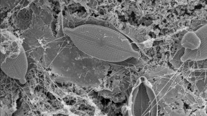 Méditerranée, des scientifiques révèlent la présence de bactéries et de virus dans la pollution plastique. / © Adam Rodriguez / Expédition Med