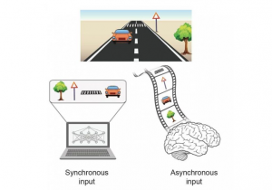 Processing an event with multiple objects. A synchronous input where all objects are presented simultaneously to a computer (left), versus an asynchronous input where objects are presented with temporal order to the brain (right). Credit : Prof. Ido Kanter, Bar-Ilan University