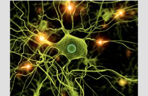 cellules microgliales