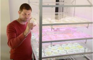 Le directeur du laboratoire, le Dr. Yiftach Yakoby, examinant une boite de Petri contenant des mico-algues développées en laboratoire (Crédit: Université de Tel-Aviv)
