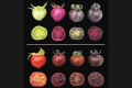 Unripe (top) and ripe (bottom) tomatoes. Regular tomatoes (far left) start out green and turn red when ripe. In contrast, genetically engineered tomatoes assume different shades of red-violet, depending on whether they produce betalains (second from left), pigments called anthocyanins (second from right) or betalains together with anthocyanins (far right)