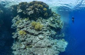 """Pour restituer l'immensité de ces récifs de la mer Rouge, Alexis Rosenfeld utilise une technique """"secrète"""" - Divergence-Images/© Alexis Rosenfeld / Divergence"""