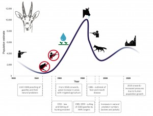Mountain gazelle population dynamics since 1920, highlighting the main drivers of its population change