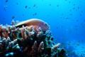 Photos of corals in the Gulf of Aqaba courtesy Prof. Maoz Fine, Bar-Ilan University