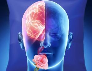 L'odeur de rose délivrée à une seule narine pendant le sommeil, stimule les souvenirs stockés dans l'hémisphère du même côté (Crédit : Sharon Tsach)