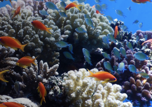 Photo : red sea reef foundation